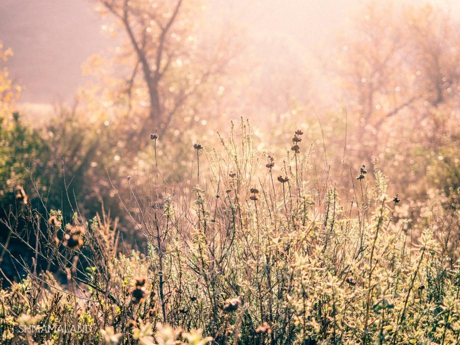 Wildwood Regional Park, Thousand Oaks, California, USA
